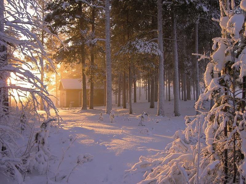 Winterlandschaft_Lebensraum_Rentiere