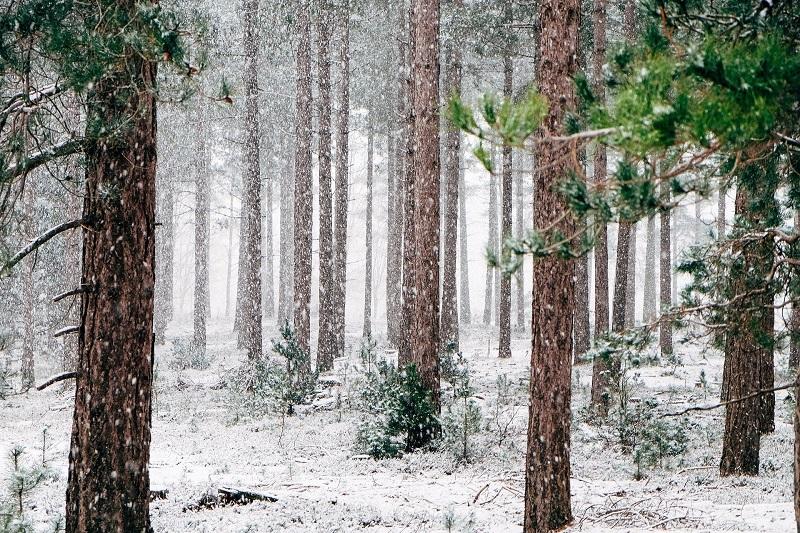 verschneiter-wald