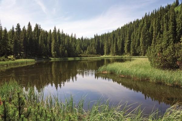 Wald_See