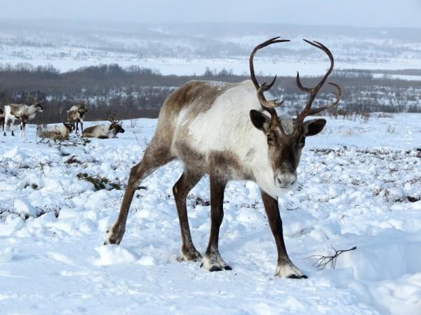 akubi-adventsgeschichte_eine-weihnachts-berraschung